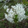 4月3日協働シンポジウム「八剣山周辺地域の地元資源とその活用」