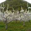 平成28年 今年の果樹の開花状況